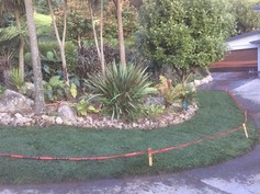 3D Project Tall Fescue 2 (600 x 450).jpg